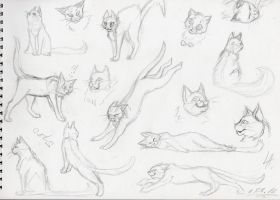 Cats by Lapapolnoch