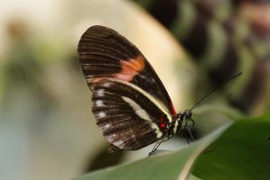 Butterfly by picture-melanie