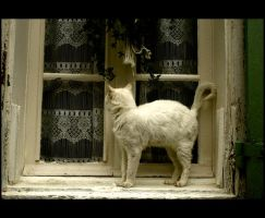 le chat blanc. by moumine