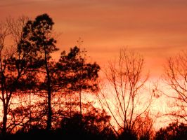 Sunset Trees by JennyM-Pics