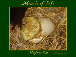 MIracle of Life 4 by dragonpyper