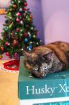 Christmas Cat by Pbsma
