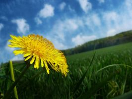 Dandelion by MyLoveisMusic