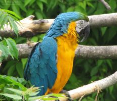 Macaw 577 by caybeach