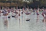 A lot of flamingo's by jennystokes