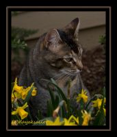 Dancing in the Daffodils by kayaksailor