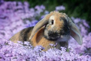 Rabbit in Spring by AlinaKurbiel