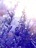 Blue Bokeh by Floreina-Photography