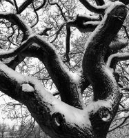 Snow and branches by BikeBoyPunk