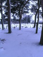 snowy graveyard -trees- 9 by dark-dragon-stock