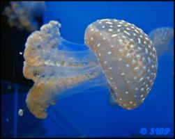 Jellyfish by Tempus1