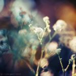 :: Sweet Lilaby :: by onixa