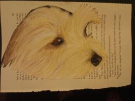 Peeking puppy on book paper by DemonRed6