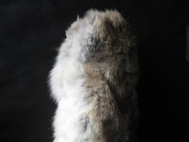 Rabbit Fur 26 by TRANS4MATICA