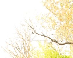 Overexposed Tree -2 by Ryan-Warner