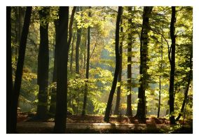 beechen forest III by Wilithin