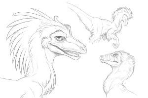 more raptors by hibbary