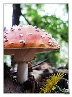 Toadstool by eyefish
