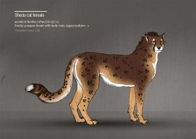 Shedu cat female 169 by Templado