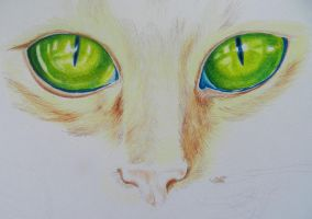 Cat Eyes-WIP by hatterfox