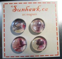 Carrion Crow Magnets by sunhawk