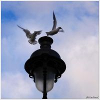 Fly away from my head... by Michel-Lag-Chavarria