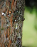 Tears Of The Tree by lumizet