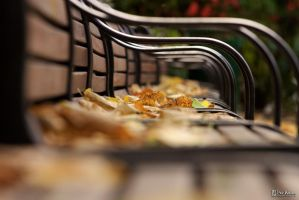 Bench by perwiken