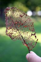 Leaf Structure by emilieleger