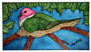 Pink Headed Fruit Dove by TornFeathers