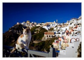 Santorini..cats by divagation