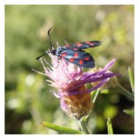 High mountain butterfly by LorenzoDiFolco