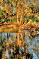 Gums and Reflections 2 by Bluebuterfly72
