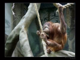 Life in Zoo 29 by firework
