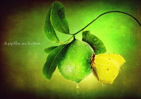 the butterfly on the lemon by paulchensmom