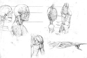 anatomy drawing by reaperff7
