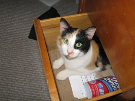Drawer Kitty by markopolio-stock