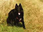 24. raven II by littleconfusion