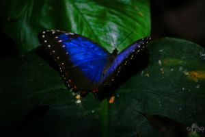 Butterfly 4 by stinq