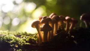 Small mushrooms in the Forest by Danimatie