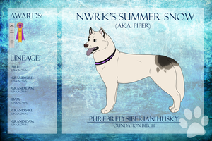 GSCh NWRK's Summer Snow SDX WP  Ref Sheet by xMush-Kennelsx