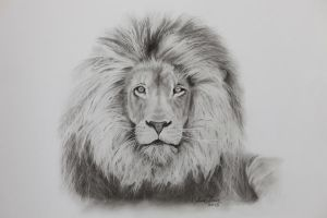 Male lion by InnerComa