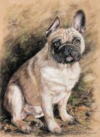 French Bulldog by DaisyreeB