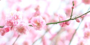 Early pink blossoms. by wfpronge