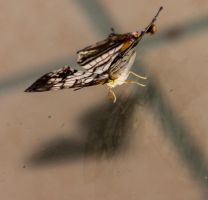 Butterfly on Glass 1 by AneiKhaar