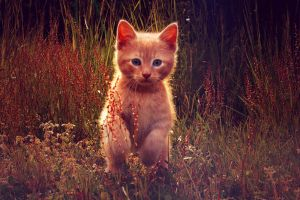 a cat by solene-MeSt