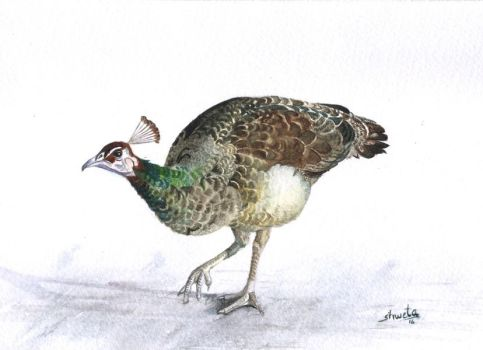 Peahen by aakritiarts