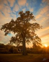 Denne Park Sunset 2 by andy1349