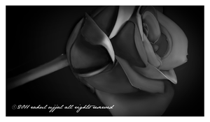 Rose black and white by RahulUjjal