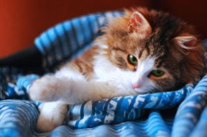 sweet kitten by NaViGa7or